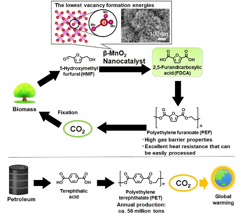 Synthetic routes to PEF from biomass resources and to PET from fossil resources: Replacing fossil based PET, known as raw material of soft drink bottles, with bio-based PEF largely contributes to reduction of CO2 emissions.