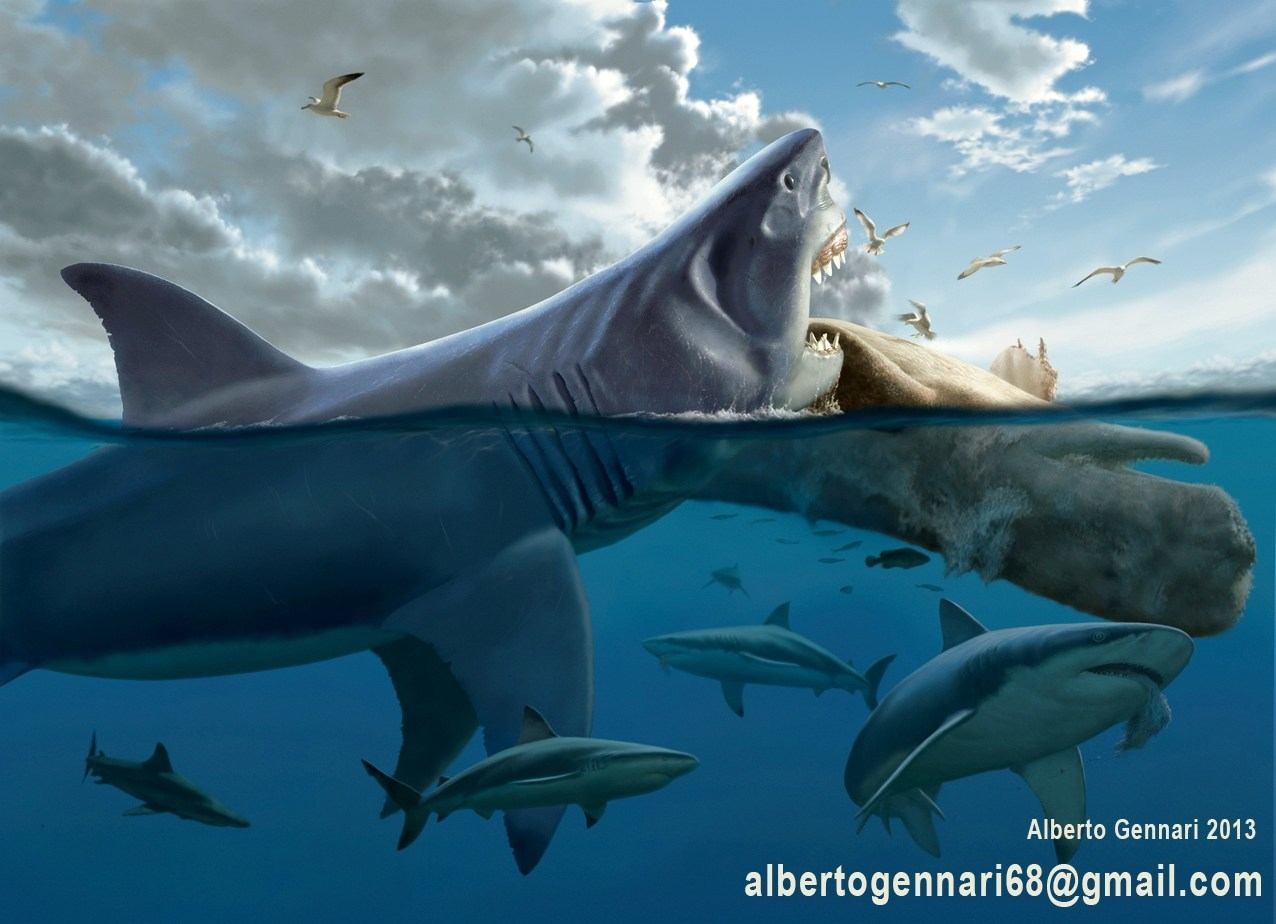 Was the 60-foot Megalodon shark, one of history's deadliest predators, really the world's largest scavenger? Research done by bestselling paleo-author Max Hawthorne may change the way many view this colossal carnivore.