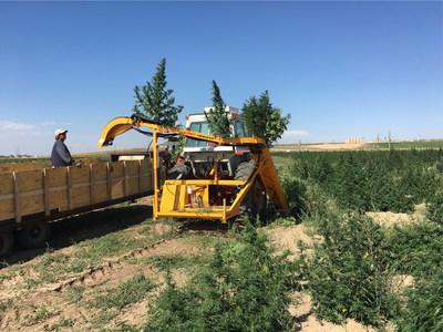 Triminator Hemp Harvester automatically harvests whole CBD hemp plants.