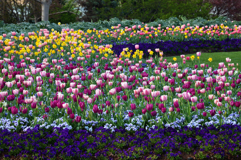 """The Dallas Arboretum and Botanical Garden, named by Architectural Digest as one of the """"15 Breathtaking Botanical Gardens to Visit This Season,"""" presents Dallas Blooms, the largest annual floral festival in the Southwest, from February 23 to April 7"""