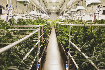 Indoor cannabis cultivation, abiding by ASTM International standard for clean facility using ProKure ® cultivation product suite.