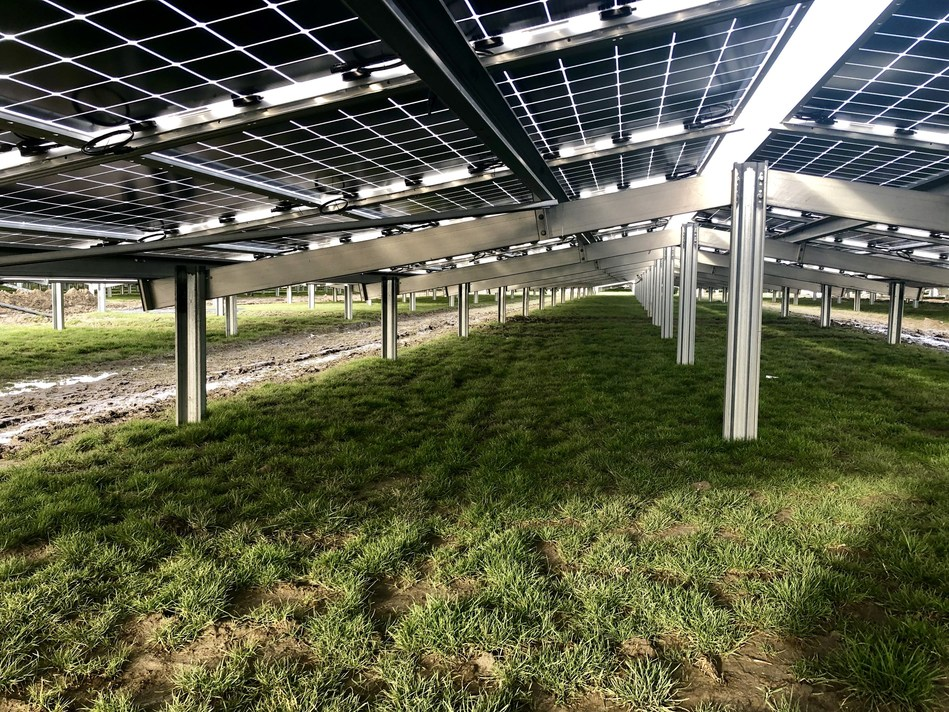 Rear side of Jolywood N-type bifacial modules installed in Zonnepark Rilland