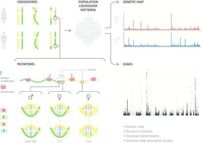 基因解码公司发布首个全分辨率人类基因组遗传图谱