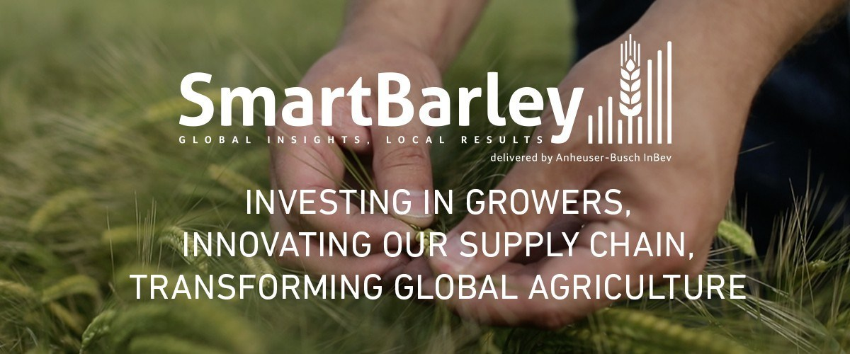 """""""Benson Hill's powerful Breed application positions us at the forefront of innovation to develop more resilient and sustainable varieties of barley for growers and the best quality malt for our brewers,"""" said Gary Hanning, Global Director of Barley Research at AB InBev."""