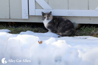 Cats are resilient, but can always use a hand staying warm and healthy during subzero cold weather. Alley Cat Allies offers four simple ways people can make life outdoors more comfortable for cats in the cold.