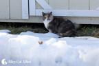 Polar Vortex Tips For Outdoor Cats