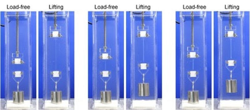 This image depicts the process in which double-network hydrogels were stretched, leading to the strengthening of the material. (Gong J. P. et al., Mechanoresponsive self-growing hydrogels inspired by muscle training, Science, February 1, 2019) (PRNewsfoto/Hokkaido University)