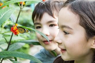 Papillons en liberté 2019 - Une histoire exceptionnelle où l'évolution se pare de ses plus beaux atours (Groupe CNW/Espace pour la vie)