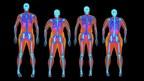 Bodyscan Reveals the 'Gender Fat Gap' is Less Than 2 Kilograms