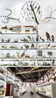Into the Wonder Room at Pointe-à-Callière - An ode to the fascinating and wonderful world of cabinets of curiosities