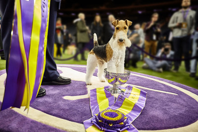 "King wins ""Best In Show"" becoming the 12th Westminster Kennel Club Dog Show Champion in 13 Years to be fueled by Purina Pro Plan."