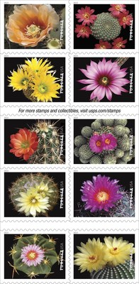 Celebrating nature's diversity in Cactus Flowers Forever