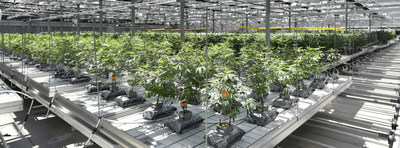 CannTrust Perpetual Harvest Greenhouse Facility in Niagara, Ontario (CNW Group/CannTrust Holdings Inc.)