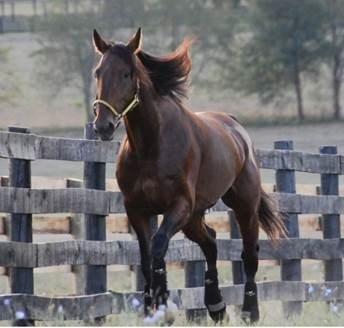 Somebeachsomewhere: Horse of a Lifetime (CNW Group/Eastlink)