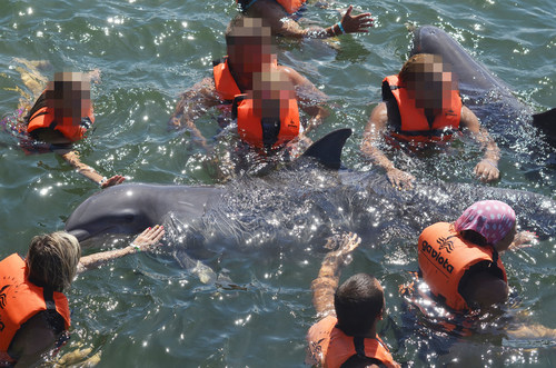 Marine mammals forced to interact with tourists in public facilities like this suffer poor welfare as a result of their captive environment. They can become stressed, aggressive and suffer health complications. Pictured: Dolphins in captivity at Ranchoi Cangrejo, Cuba. Country: Cuba Credit Line: World Animal Protection Date: 17/08/2018 (CNW Group/World Animal Protection)