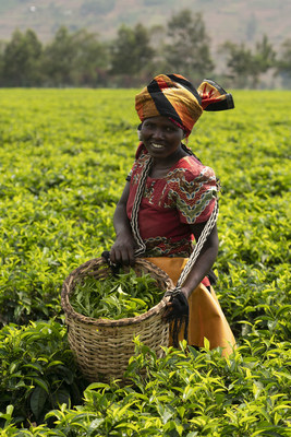 Kroger visits the Fair Trade Certified Sorwathe Tea Estate in Rwanda for Women's History Month to meet the inspiring women behind its Simple Truth Organic Chai and Simple Truth Earl Grey Black Tea.