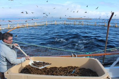 Tim Scates, an Illinois Soybean Association (ISA) leader and soybean producer from Carmi, Illinois, feeds a soy-based formulation to ranched tuna near the Coronado Islands of Mexico during ISA trials. This trial demonstrated the viability of sustainable, renewable feed in high-value tuna production.