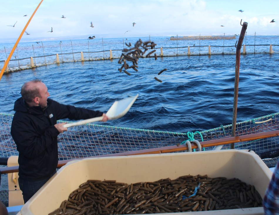 Tim Kurt, D.V.M., Ph.D., scientific program director for Foundation for Food and Agriculture Research (FFAR), observed a soy-based tuna feed trial funded by the Illinois Soybean Association (ISA) checkoff program in January 2018. This trial, held off the Coronado Islands of Mexico, reinforced the value of coupling sustainable feed and hatchery technology for tuna production.