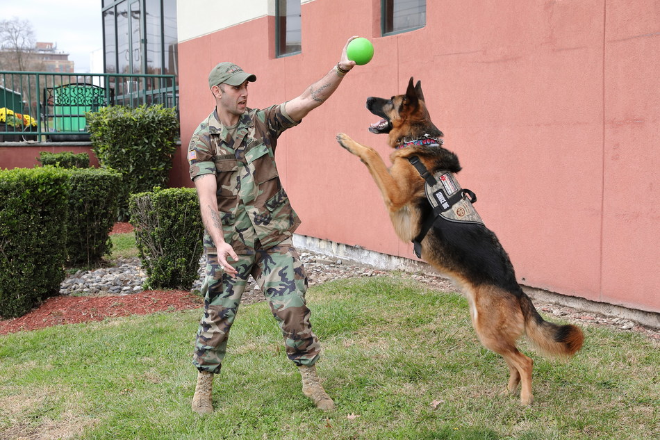 Disabled War Veteran James Hayes & his service dog Barrett playing with his indestructible chew-toy invention,The Barrett Ball (PRNewsfoto/Ethical Products Inc.)