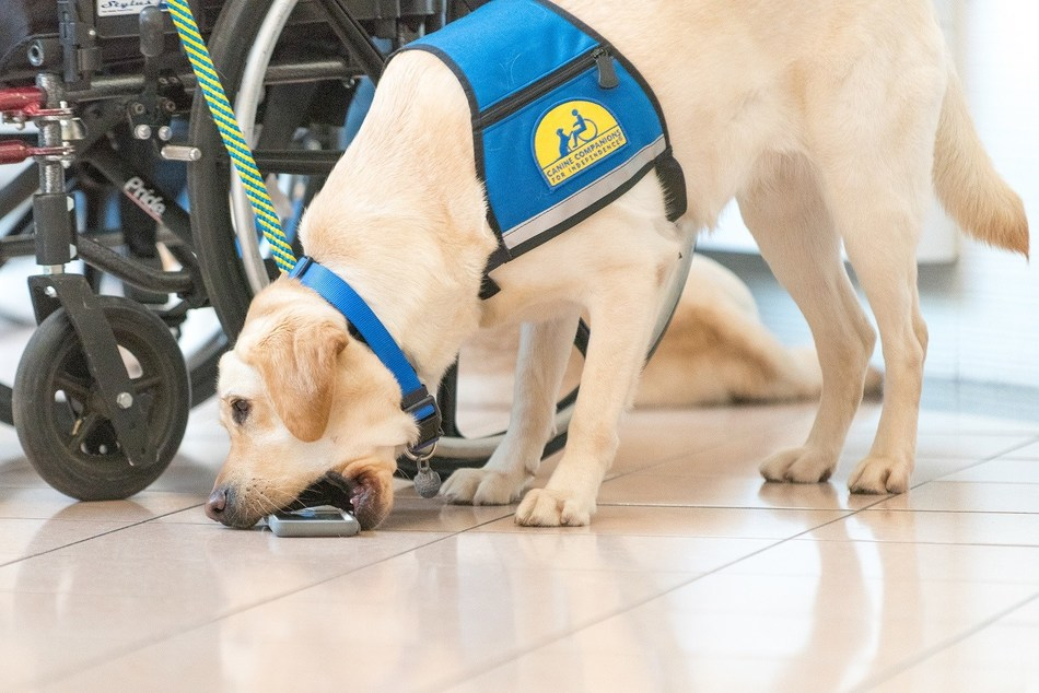 Canine Companions assistance dogs learn over 40 commands to help with physical tasks