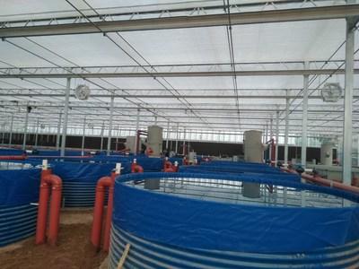 BioFishency筹集240万美元资金用于水产养殖的水处理系统