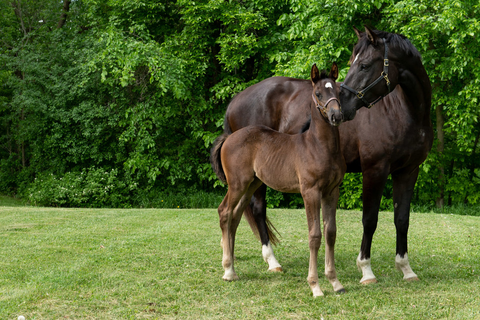 The Royal Canadian Mounted Police (RCMP) needs your help naming foals. (CNW Group/Royal Canadian Mounted Police)