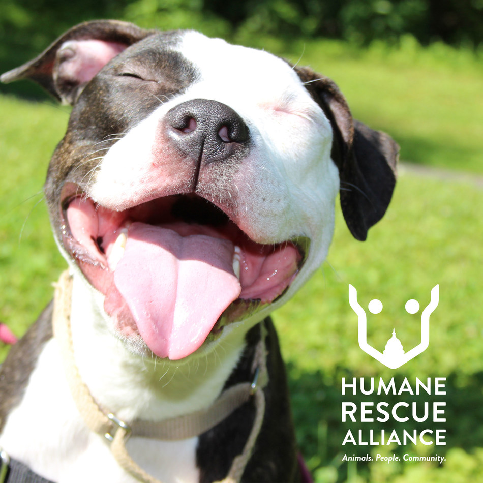 Subaru Partners with Humane Rescue Alliance to Help Pets Find Loving Homes at the 2019 Washington Auto Show.