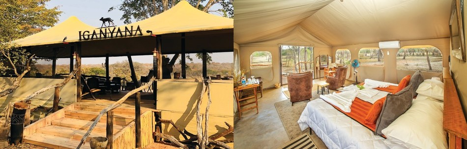 The Iganyana tented tamp is a Vantage Deluxe World Travel-exclusive safari camp located in a private concession on the borders of Hwange National Park, Zimbabwe's flagship safari destination.