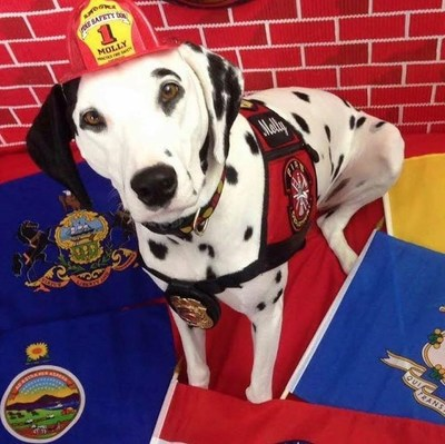 Molly the Fire Safety Dog in her firefighting glory. Photo: Dayna Hilton (CNW Group/Ontario Science Centre)