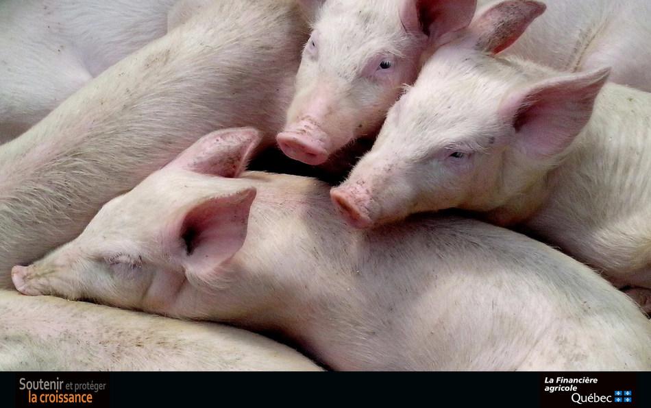 Programme d'assurance stabilisation des revenus agricoles : 158,5 millions de dollars versés aux producteurs de porcs en 2018 (Groupe CNW/La Financière agricole du Québec)