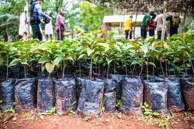 Dozens of Ebony seedlings await planting in Cameroon's Congo Basin rainforest as part of Taylor Guitars - The Ebony Project. Photo credit: Chris Sorenson/Taylor Guitars.