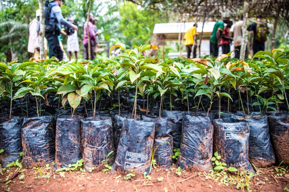 Dozens of Ebony seedlings await planting in Cameroon's Congo Basin rainforest as part of Taylor Guitars - The Ebony Project. Photo credit: Chris Sorenson/Taylor Guitars.