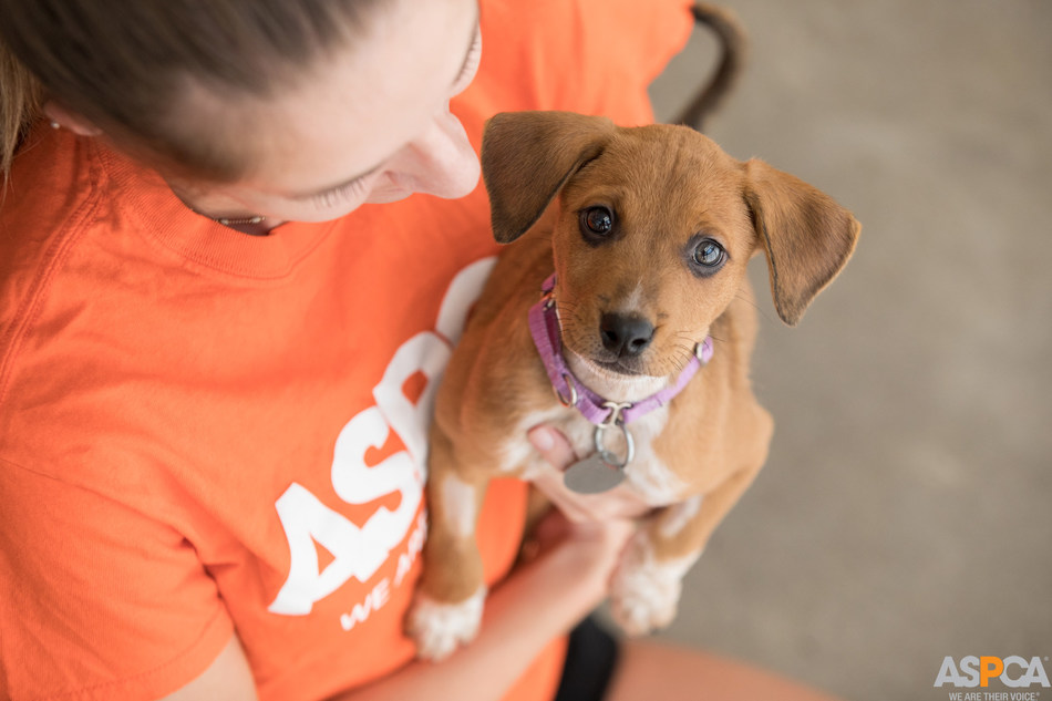 Subaru Partners with the ASPCA® (American Society for the Prevention of Cruelty to Animals®) to Help Pets Find Loving Homes at the 2019 New York International Auto Show