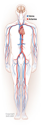 Laid end to end, the body's blood vessels would go for 100,000 miles. In illustrations, arteries are often depicted in red, and veins in blue.