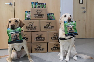 Toga and Tenley, Dogs4Diabetics Service Dogs, proudly show off their favorite new treats, Redbarn Protein Puffs.