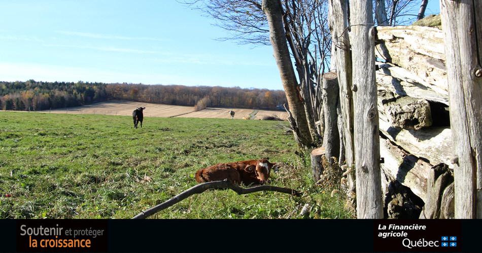 Programme d'assurance stabilisation des revenus agricoles : 75,7 millions de dollars en soutien aux producteurs de veaux d'embouche et de bouvillons et bovins d'abattage (Groupe CNW/La Financière agricole du Québec)