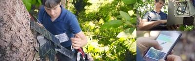 HUAWEI CLOUD AI y los teléfonos celulares de Huawei ayudan a RFCx a proteger la selva tropical