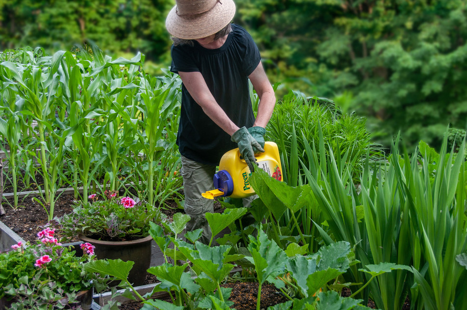 Minimize weed growth and time spent weeding with a natural pre-emergent such as Preen Natural Vegetable Garden Weed Preventer. The easy-to-apply, granular product lessens the need to weed for up to four weeks per application. Use it around food crops, including established vegetables, herbs and fruits to stop weeds as seeds, so they don't grow.