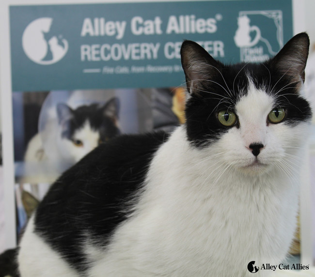 Gordon was rescued in March and received medical attention at the Alley Cat Allies Recovery Center. He is now available for adoption.