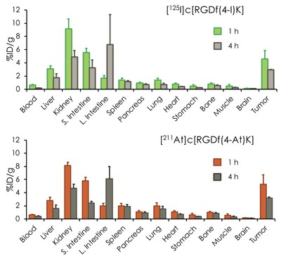 Biodistribution of [211At]c[RGDf(4-At)K] and [125I]c[RGDf(4-I)K] in tumor-bearing mice. [211At]c[RGDf(4-At)K] and [125I]c[RGDf(4-I)K] showed similar biodistribution. It makes radiotheranostics possible (PRNewsfoto/Kanazawa University)