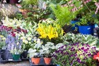Great Gardening Weekend 2019 - Cultivating Biodiversity with Heirloom Plants