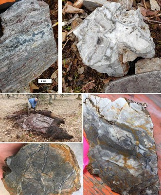 Textures of various quartz veins very recently collected at Shot Rock, (CNW Group/Northern Shield Resources Inc.)