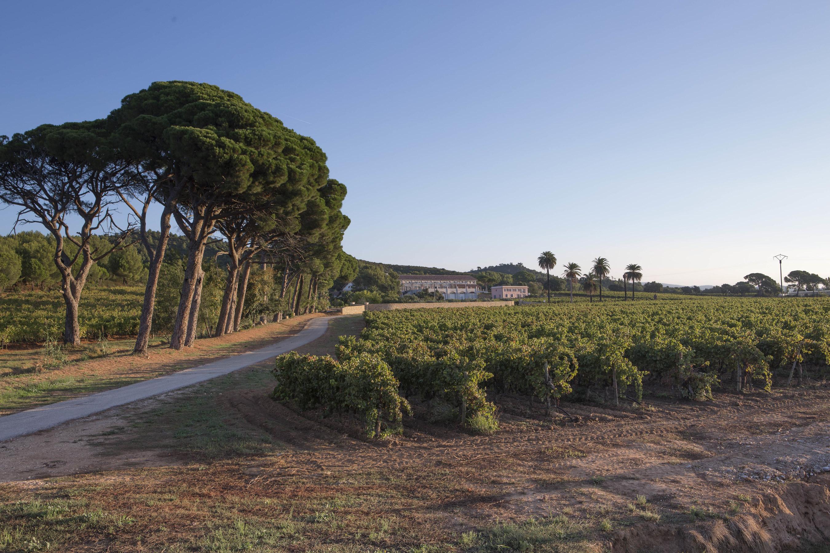Moët hennessy acquires château du galoupet côtes de provence cru