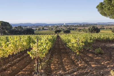 Moet Hennessy Acquires Chateau du Galoupet, Cotes-de-Provence, Cru Classe Since 1955
