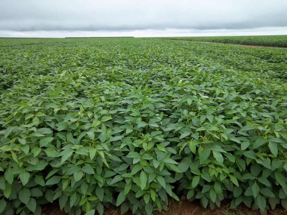 Embrapa will Leverage and Enrich Benson Hill's CropOS™ Platform to Accelerate Crop Improvement Across South America