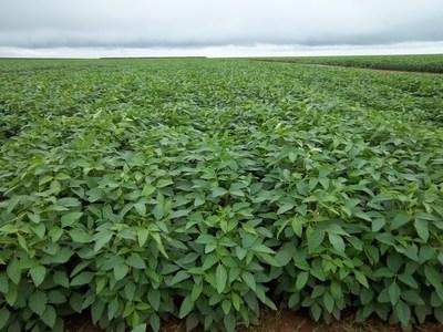 Embrapa aprovechará y enriquecerá la plataforma CropOS™ de Benson Hill para acelerar el mejoramiento de cultivos en América del Sur