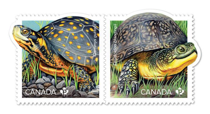 Timbres des tortues en voie de disparition (Groupe CNW/Postes Canada)