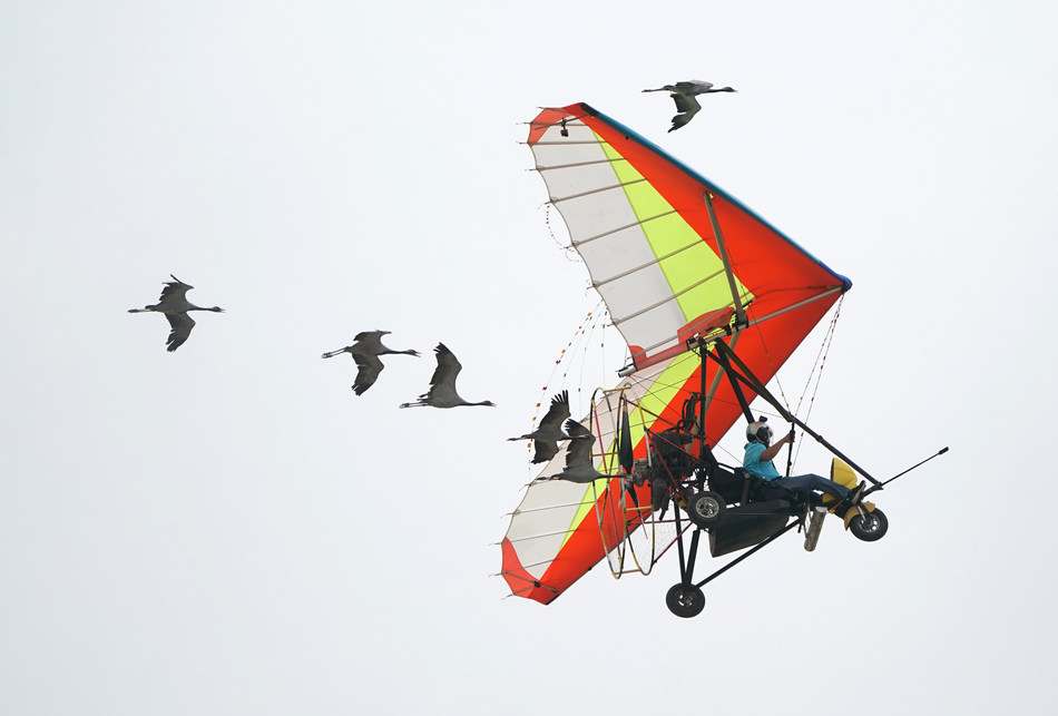 Fan Dawei, pilot of a powered glider, led the wild geese he fed while performing for the opening ceremony of WFE on May 18.