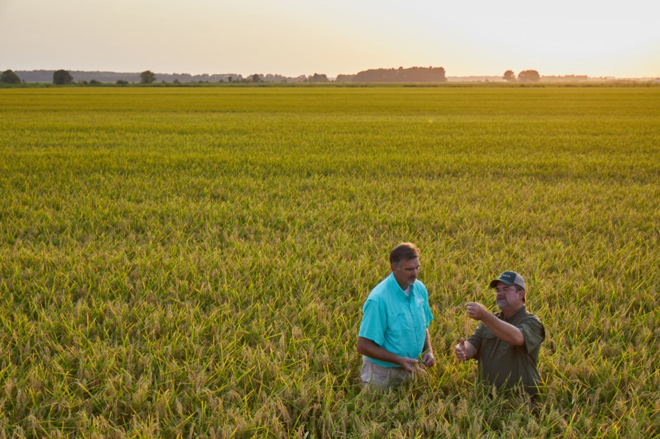 Leader in hybrid rice seed to evaluate CRISPR Cms1 portfolio