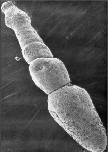 Protégez vos animaux de compagnie et votre famille contre Echinococcus multilocularis - Photo gracieusement offerte par Bayer (Groupe CNW/Institut canadien de la santé animale)